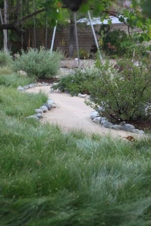 Carex Pansa IdealMow Meadow